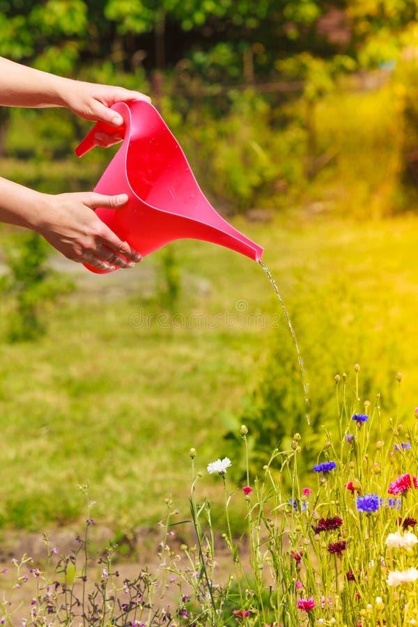 Kobieta wręcza podlewanie rośliny w ogródzie zdjęcie royalty free