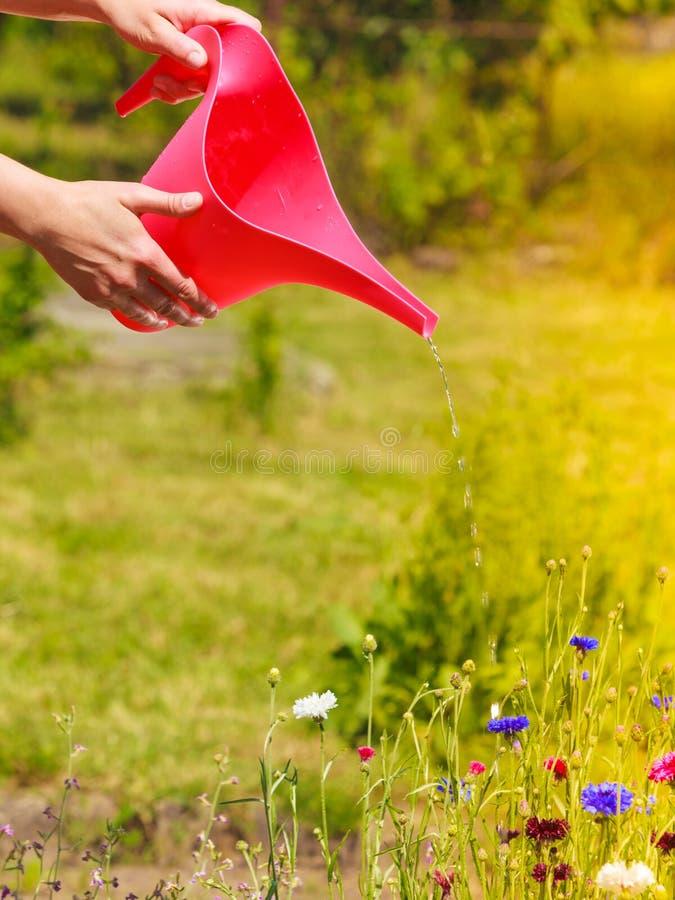 Kobieta wręcza podlewanie rośliny w ogródzie obrazy royalty free