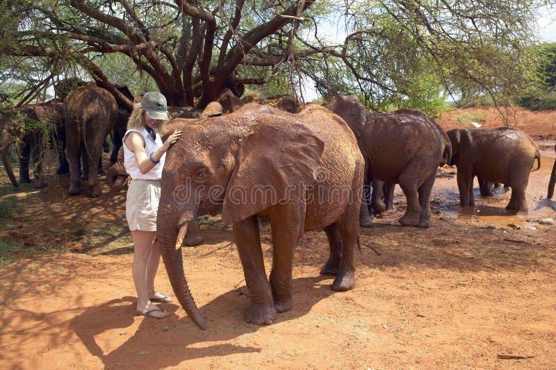 Kobieta z Adoptowanego dziecka Afrykańskimi słoniami przy David Sheldrick przyrody zaufaniem w Tsavo parku narodowym, Kenja obraz stock