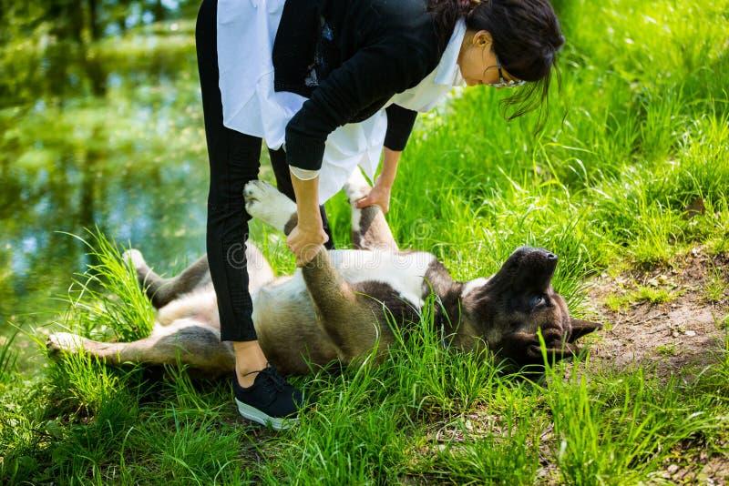 Kobieta z Amerykańskim Akita psem obraz stock