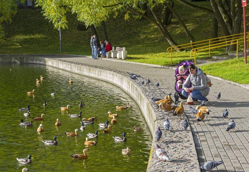 Kobieta z dzieckiem karmi kaczki na quay stawie fotografia stock