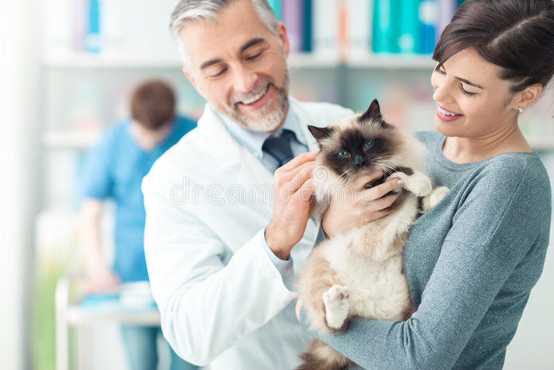 Kobieta z jej kotem przy weterynaryjną kliniką zdjęcia stock