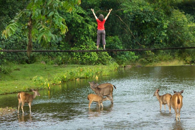 Kobieta z jeleni pić obrazy royalty free
