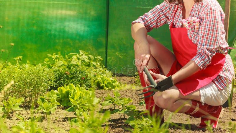 Kobieta z ogrodnictwa narzędziem pracuje w ogródzie zdjęcia stock