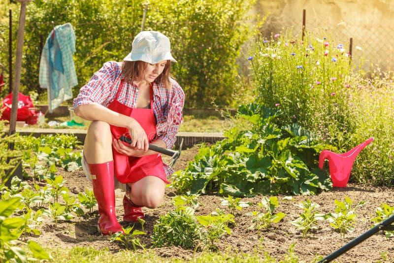 Kobieta z ogrodnictwa narzędziem pracuje w ogródzie obraz stock