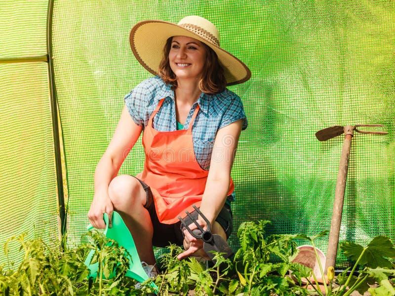 Kobieta z ogrodnictwa narz?dziem pracuje w szklarni obrazy stock