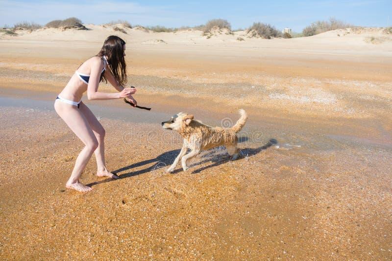 Kobiety bruenette w bikini bawić się z jego źrebię psa labradorem na seashore, wp8lywy na kamerze fotografia royalty free