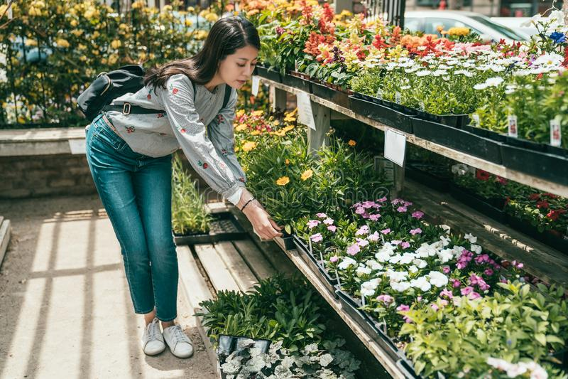 Kobiety chylenie i wybierać kwitniemy w kwiaciarni obrazy stock