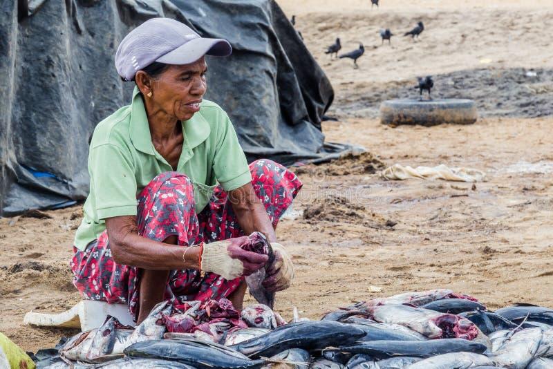 Kobiety cleaning ryba zdjęcia stock