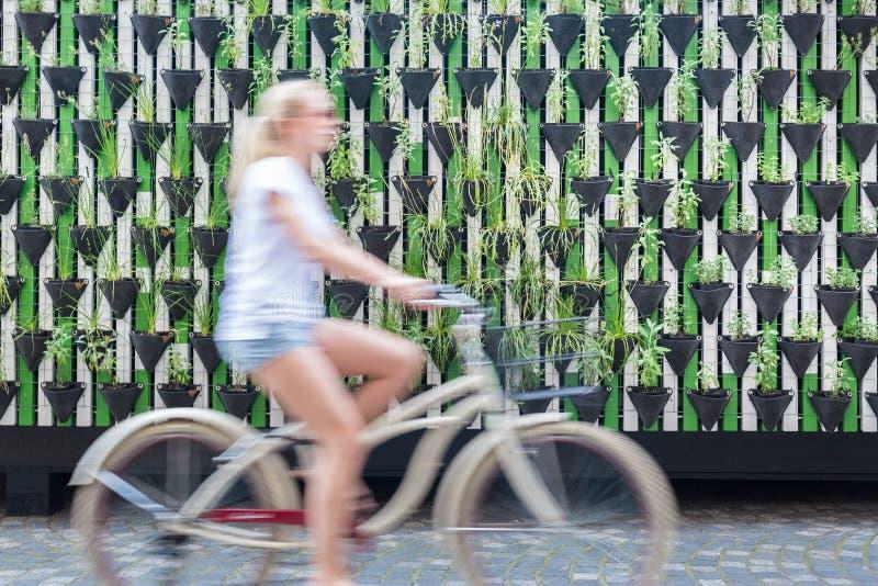 Kobiety jeździecki bycicle zieloną miastową vertical ogródu ścianą obrazy royalty free