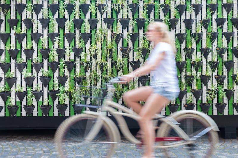 Kobiety jeździecki bycicle zieloną miastową vertical ogródu ścianą zdjęcia stock