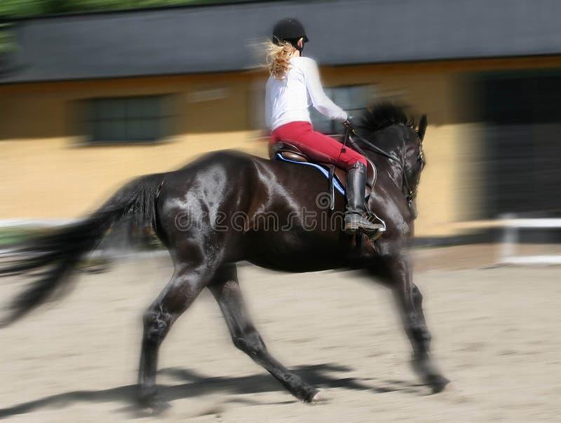 kobiety jeździeckie obrazy royalty free