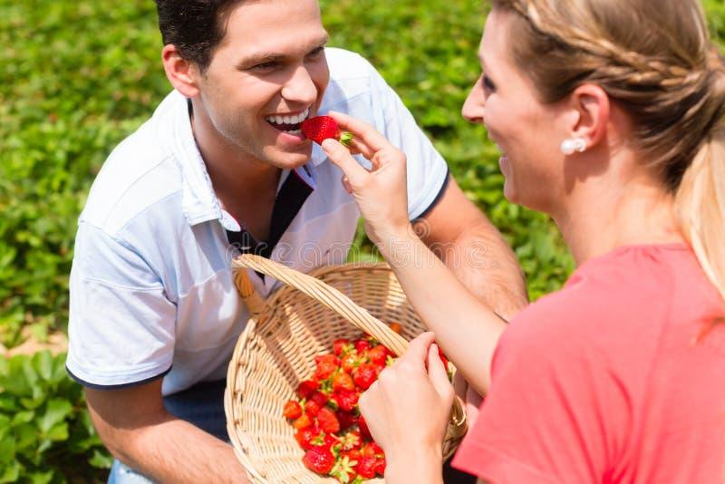 Kobiety karmienia mężczyzny truskawki ono podnosił zdjęcia royalty free