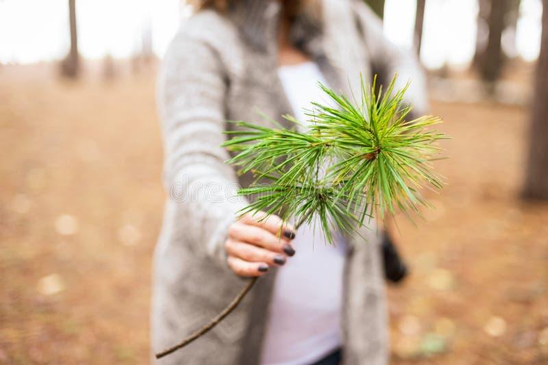 Kobiety mienia sosny gałąź w lesie zdjęcie royalty free