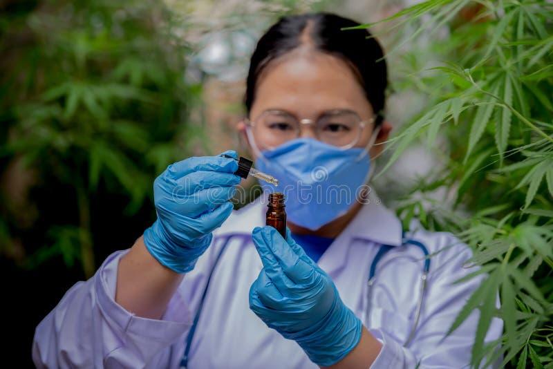 Kobiety-naukowcy badają jakość oleju z konopi do celów medycznych fotografia royalty free