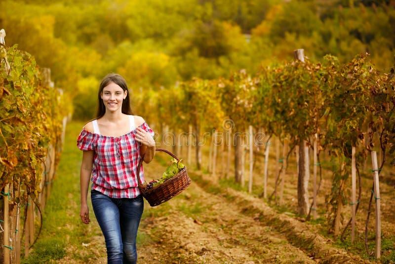 Kobiety odprowadzenie w winogradów rzędach obrazy royalty free
