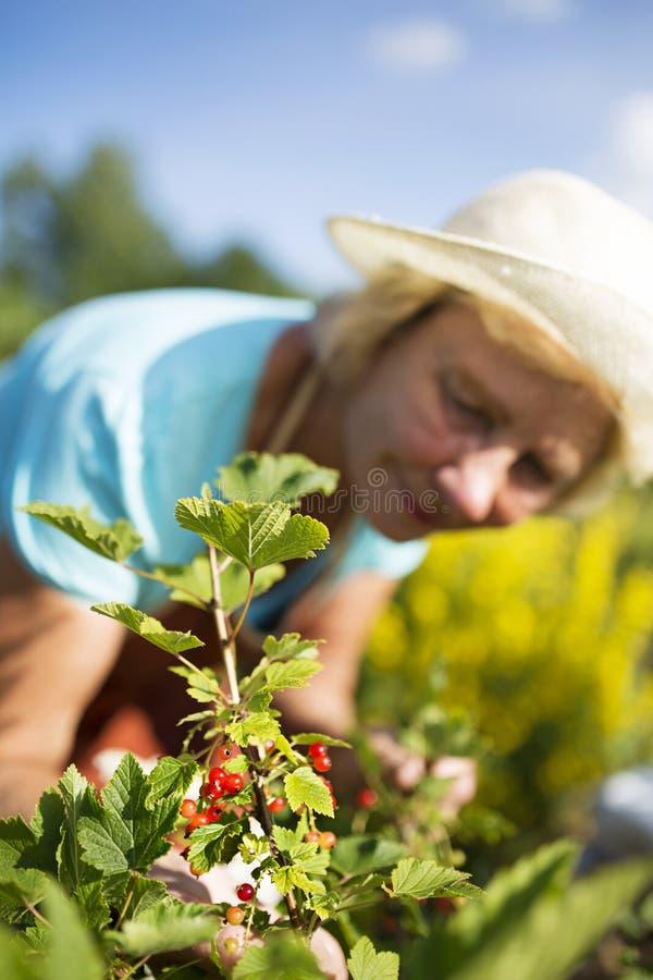 Download Kobiety Ogrodniczka Bierze Opiekę Ogród Obraz Stock - Obraz złożonej z hobby, stary: 57668449