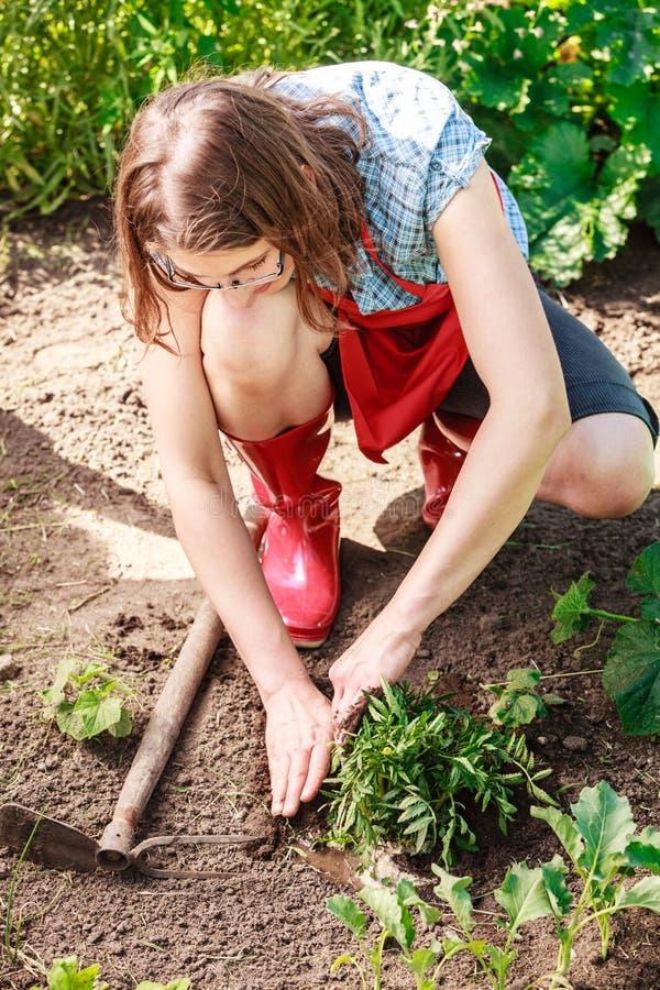 Kobiety ogrodniczka replanting kwiaty zdjęcie royalty free