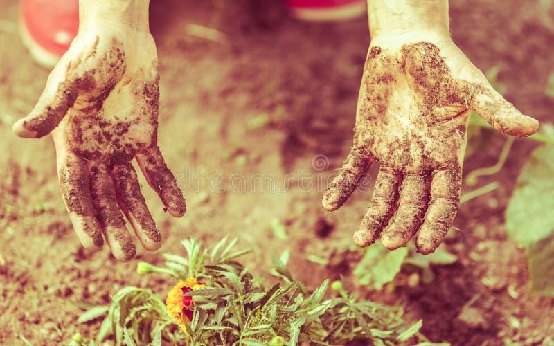 Kobiety ogrodniczka replanting kwiaty zdjęcia stock