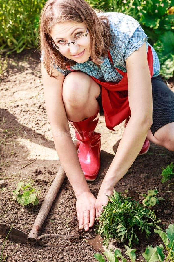 Kobiety ogrodniczka replanting kwiaty obrazy royalty free