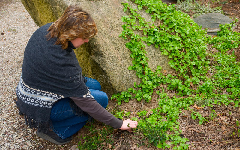 kobiety ogrodowy działanie obrazy royalty free