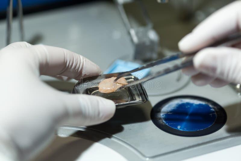 Kobiety pracuje w mikrobiologii Biochemiczny laboratorium i N - zdjęcie stock