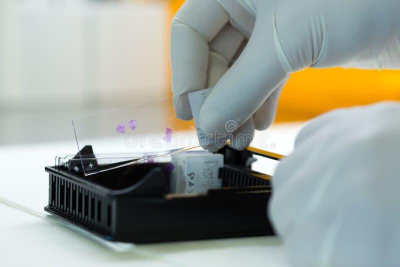 Kobiety pracuje w mikrobiologii Biochemiczny laboratorium i N - obraz royalty free