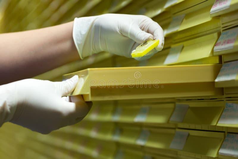 Kobiety pracuje w mikrobiologii Biochemiczny laboratorium i N - obraz stock