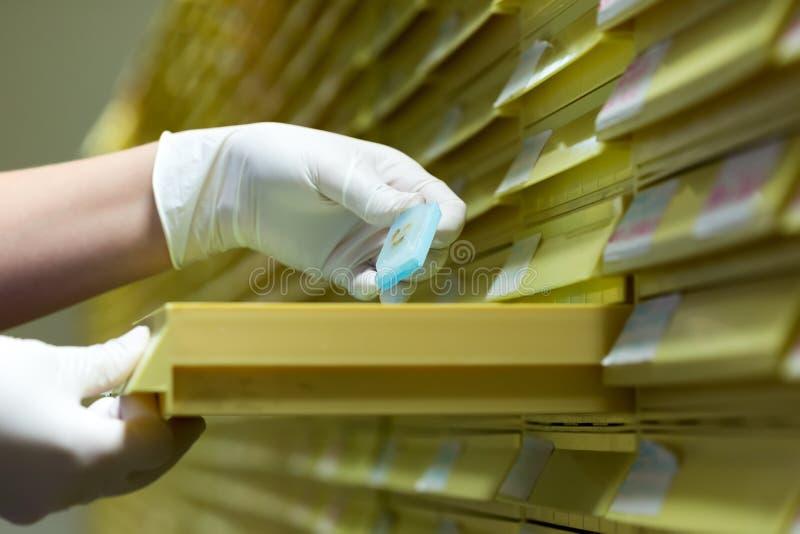 Kobiety pracuje w mikrobiologii Biochemiczny laboratorium i N - zdjęcia royalty free