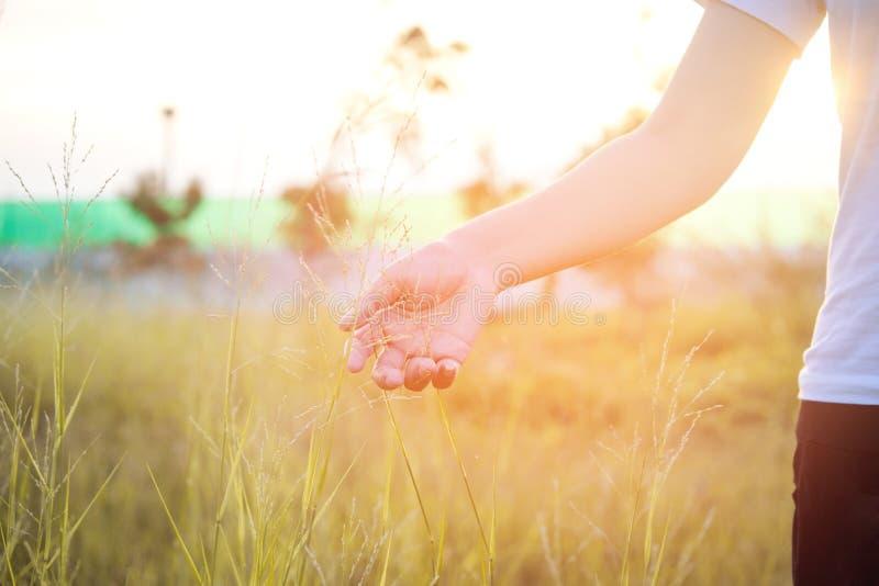 Kobiety ręka dotyka zielonej trawy łąki zdjęcie royalty free