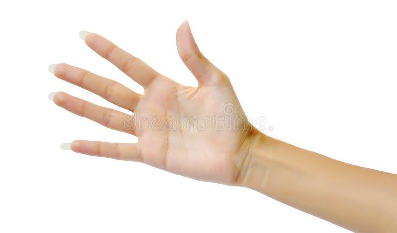 Kobiety ręka (palma) obrazy stock