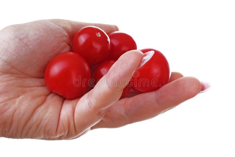 Kobiety ręka trzyma czereśniowego pomidoru pomidory na odosobnionym białym wycinanki tle Pracowniana fotografia z pracowniany ośw zdjęcia stock