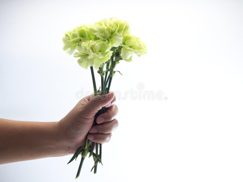Kobiety ręki chwyta zieleni goździk na bielu zdjęcia stock