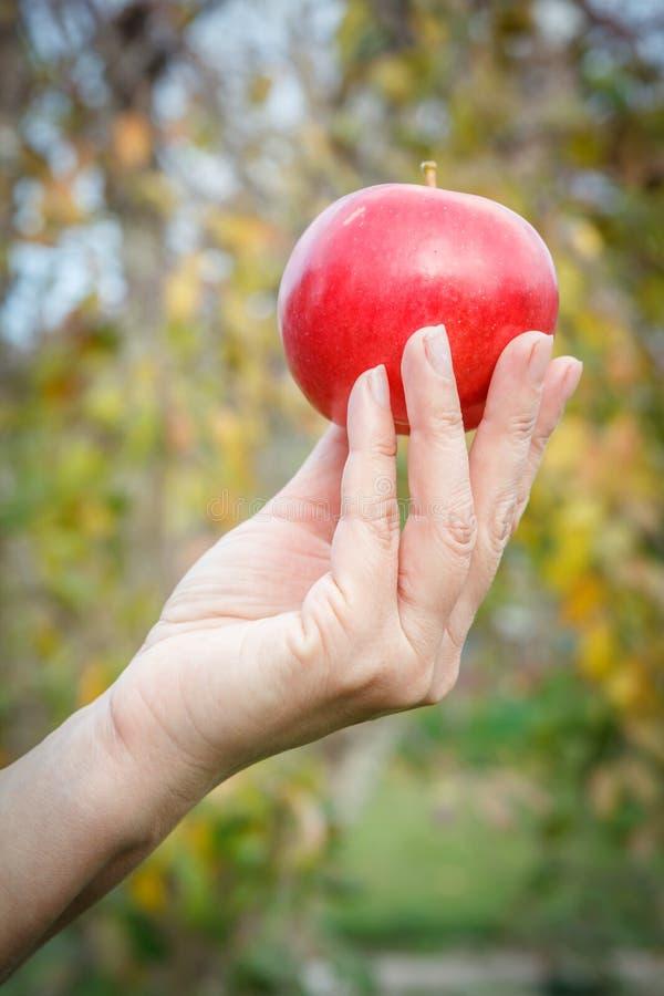 Kobiety ręki mienia czerwony jabłko przeciw naturalnemu tłu fotografia stock