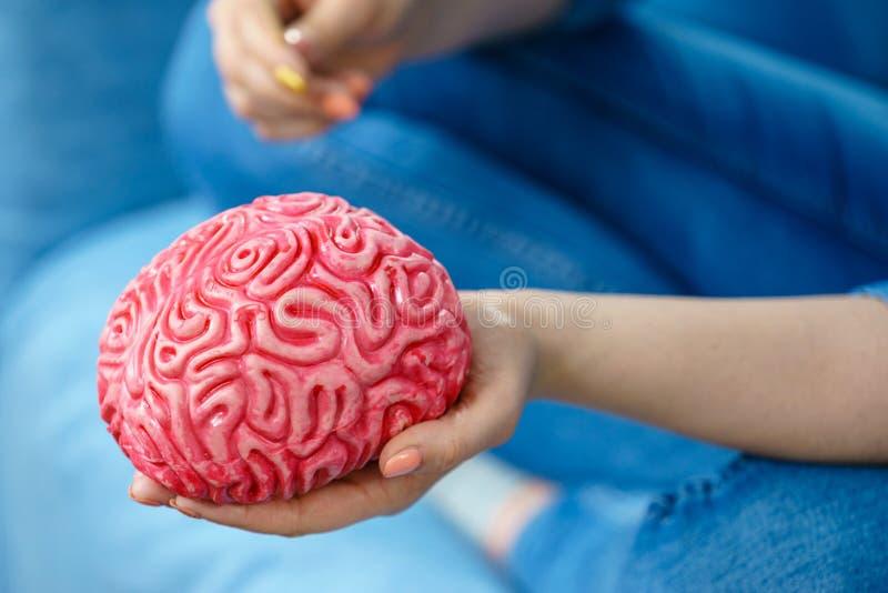 Kobiety ręki mienia mózg obraz royalty free