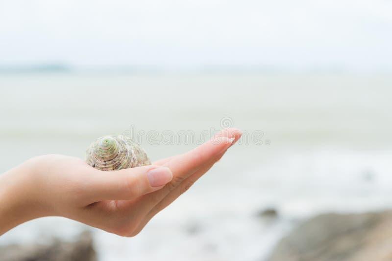 Kobiety ręki mienia plaży skorupa w tropikalnym miejscu zdjęcia stock