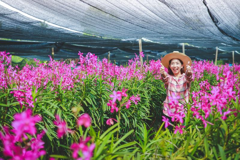 Kobiety robi orchidee dla sprzedaży w kraju i za granicą zdjęcie royalty free