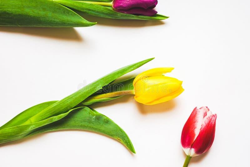 Kobiety ` s dnia 8 marszu tło z wiosną kwitnie obrazy royalty free