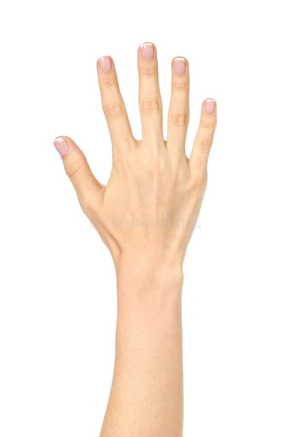 Kobiety ` s otwarta palma odizolowywająca na bielu obraz royalty free