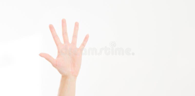 Kobiety ` s ręka odizolowywająca na bielu Głosować rękę Egzamin próbny Up kosmos kopii szablon blank fotografia stock
