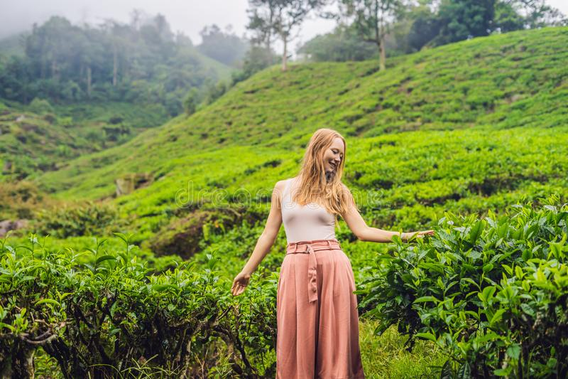 Kobiety turystyczne przy herbacianą plantacją Naturalni wybrani, Świezi herbaciani liście w herbacie, uprawiają ziemię w Cameron  obrazy stock