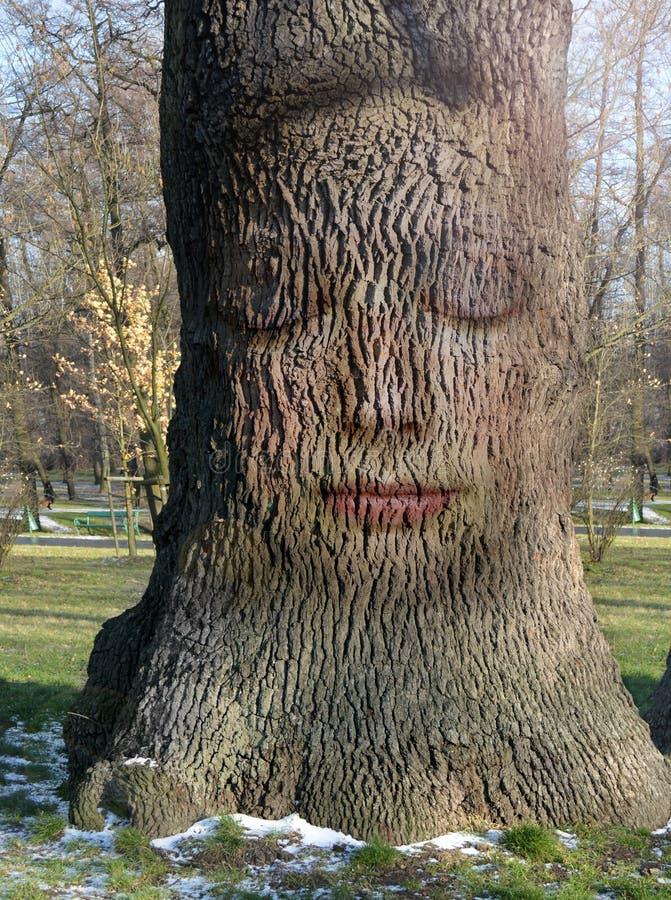 Kobiety twarz osadzająca w barkentynie drzewo zdjęcie stock