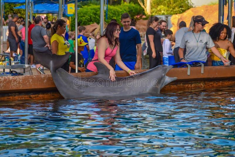 Kobiety uderzania Bottlenose delfin przy Seaworld w zawody międzynarodowi przejażdżki terenie zdjęcie royalty free