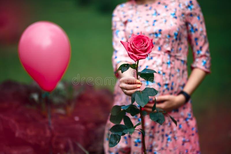 Kobiety w ciąży macania garbek podczas gdy trzymający menchii róży dziewczyny czekanie obrazy stock