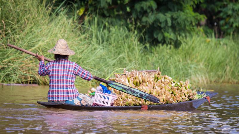 Kobiety wiosłuje schronu czółno w Inle jeziorze, Myanmar obraz stock