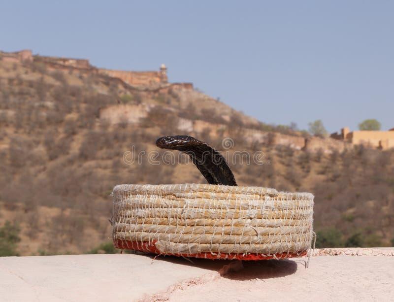 Kobra w fakir ` s koszu przeciw Amer fortowi zdjęcia stock