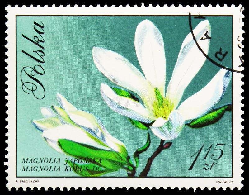 Kobus de magnolia, fleurs dans le serie naturel de couleurs, vers 1971 images stock