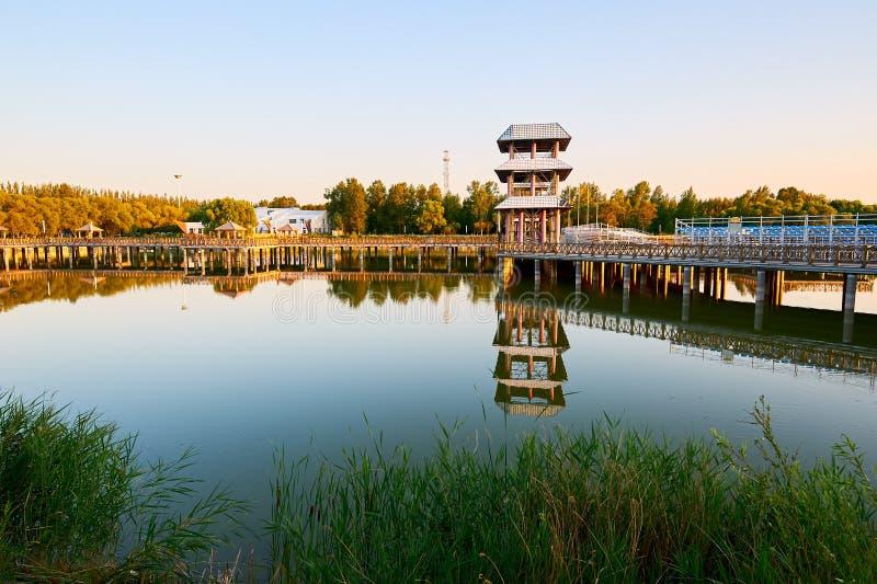 Kobyłka stojak w jeziorze obraz royalty free