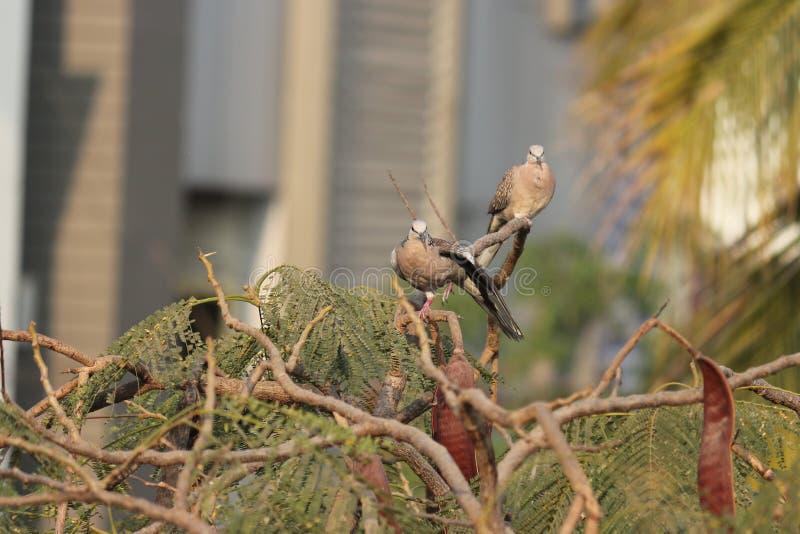 Kocha ptaki w naturze właśnie bawić się w ranku zdjęcia royalty free