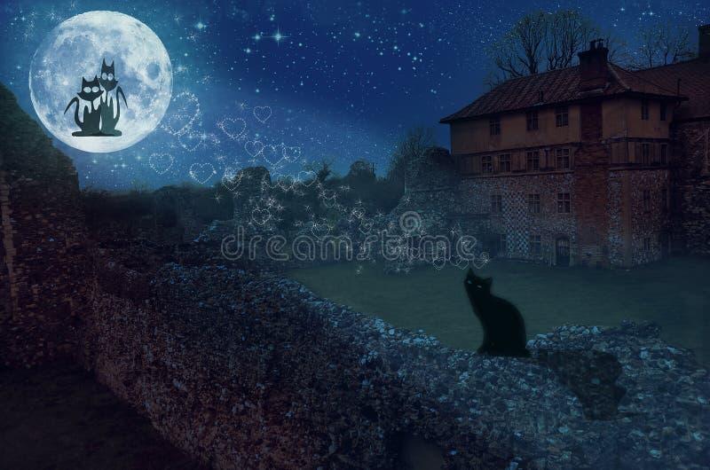 kochająca kot księżyc dwa zdjęcie royalty free